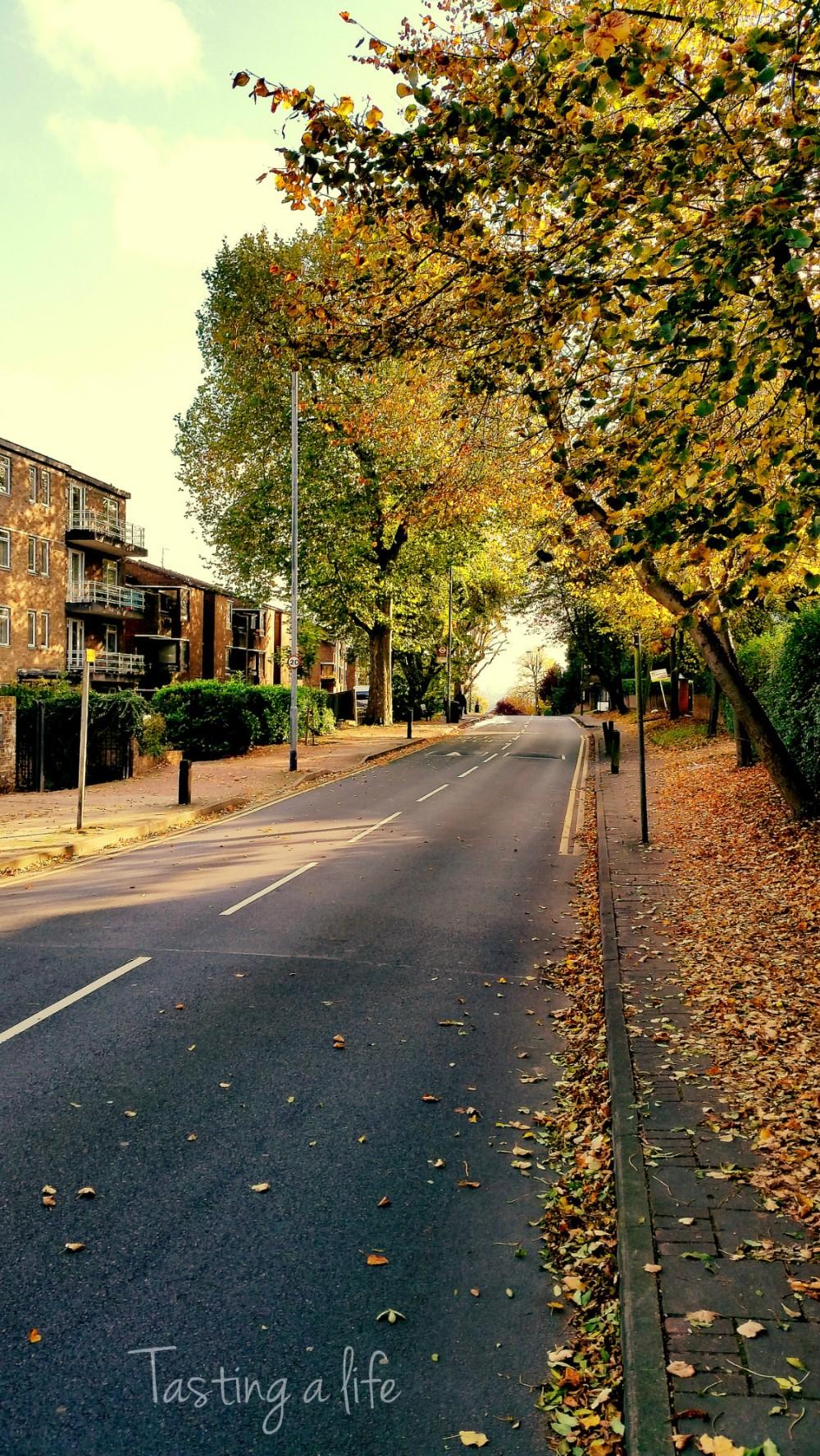 Autumn_Southfields