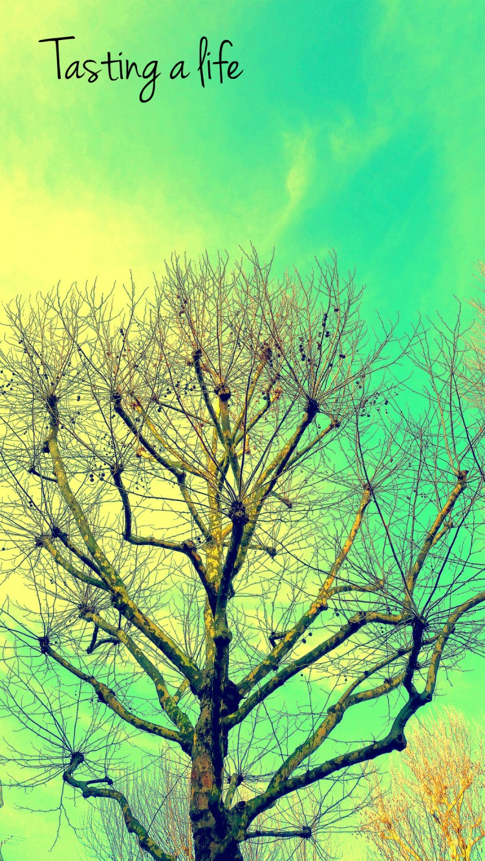 Tree_wallpaper